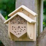 abri abeilles sauvages