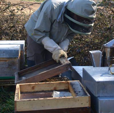 Hivernage : préparation au rucher Val de Sarthe